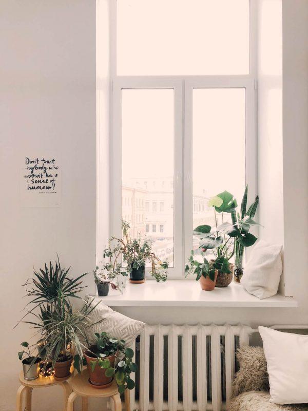 Okno-biale-sciany-minimalistyczny-styl-urzadzenia-z-roslinami