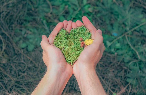 Dłonie trzymające zieloną trawę